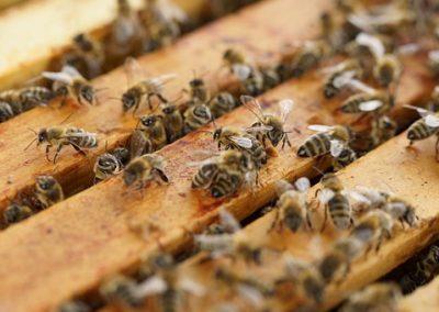 beehive-1143380__340